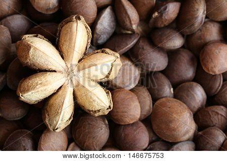 Legumes of Sacha inchi or Inca peanut for design concept health care of tropical herbs.