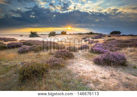 Hoge Veluwe Sand Heathland