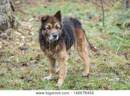 Portrait of adorable cross-breed dog looking seriously.