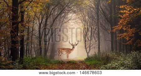 Fallow deer standing in a dreamy misty forest with beautiful moody light in the middle and framed by darker trees