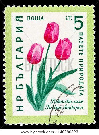 Bulgaria - Circa 1960