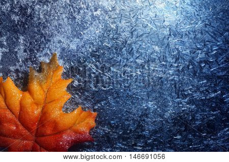 Autumn leaf in blue frost background
