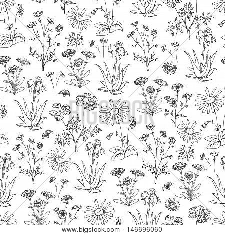 Healing Herbs Seamless Pattern. Holistic Medicine Print. Handdrawn Aloe vera, Arnica, Calendula, Chamomile and Coriander. Health and Nature collection. Vector Illustration of Ayurvedic Herb. Illustration