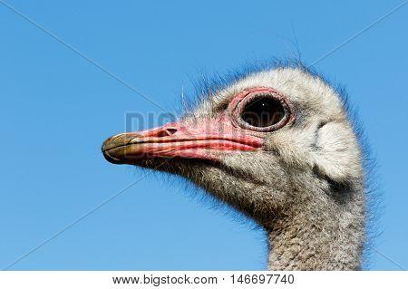 Now Thats A Close Up Of An Ostrich