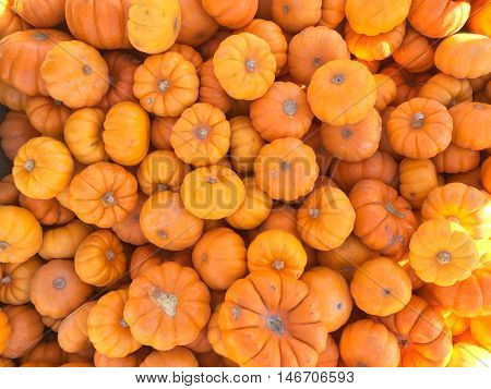 Bright orange mini pumpkins fall seasonal background