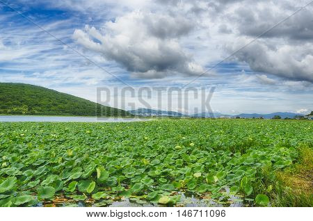 Lake Goose lotus on the background of clouds island Putyatin Primorsky Krai Russia