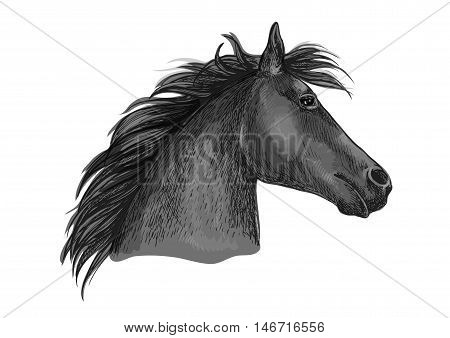 Black racehorse sketch with horse head of purebred arabian stallion. Horse racing badge, equestrian sport and horse breeding farm symbol design