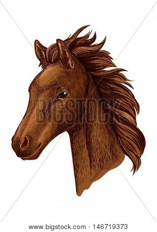 Brown mare horse head sketch with young chestnut filly of arabian breed. Equestrian sport, horse racing or horse breeding farm design