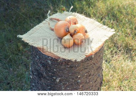 Vintage Photo, Natural Unpeeled Onions On Wooden Stump