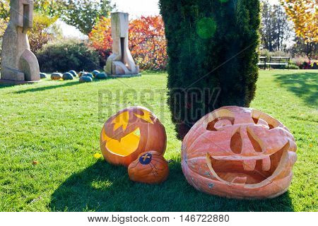 Halloween in the garden, pumpkin under the tree on the grass - traditional decoration