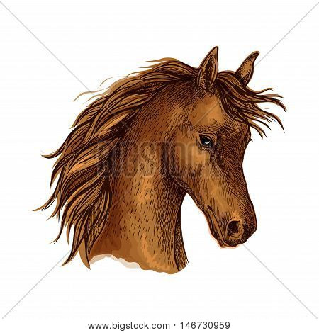 Sketched horse head of arabian breed. Brown purebred mare horse with flying mane. Equestrian sporting competition, horse racing or t-shirt print design