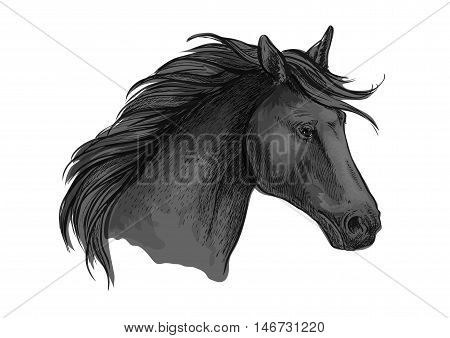 Sketched riding horse head. Black purebred arabian stallion for riding club symbol, equestrian sporting mascot or horse racing badge design
