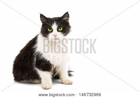 Black & white cat on white isolated background.