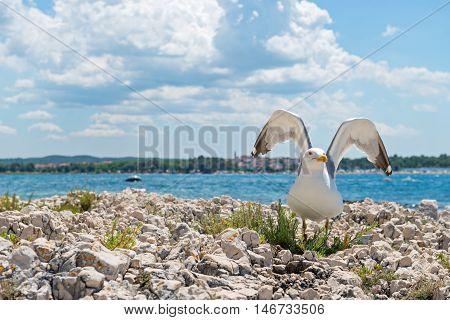 Seagull on the rocky beach in Istria, Croatian coast