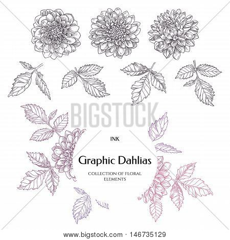 Hand-drawn ink dahlias. Isolated floral elements. Vector graphic flowers on white background. Collection contour buds leaves dahlias.