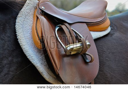 Horse with english saddle