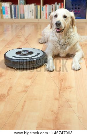 Golden Retriever dog is lying next to the robotic vacuum cleaner on the floor. All potential trademarks and control buttons are removed. Free space for your text in the bottom of the photo.