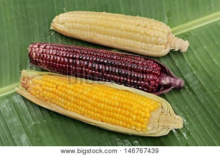 Colorful streamed sweet corn ready sserved as Thai local corn in light yellow,sunshine sweet corn in bright yellow and sticky corn in purple seed on banana leaf. Top view.