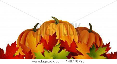 The vector illustration of pumpkins isolated on white, maple leafs. It is autumn. It is Thanksgiving day.