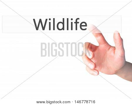 Wildlife - Hand Pressing A Button On Blurred Background Concept On Visual Screen.