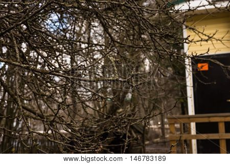 willow branch in the yard, early spring