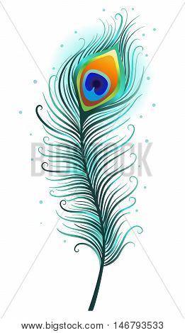 Peacock feather on a white background. Vector Illustration