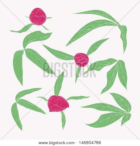 set of beautiful peony leaves and buds in vintage colors isolated on white. Hand-drawn contour lines and strokes.