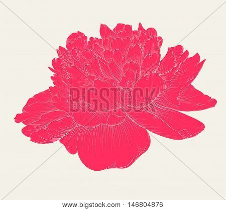 beautiful peony flower in vintage colors isolated on background. Hand-drawn contour lines and strokes.