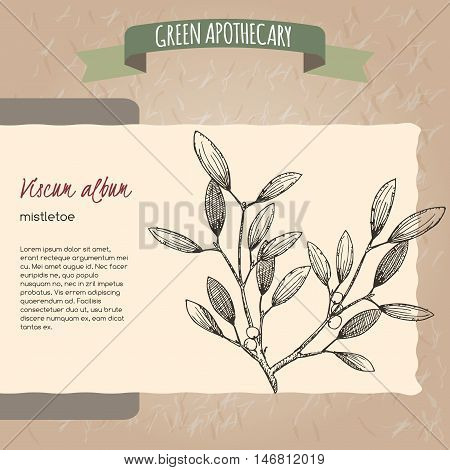 Viscum album aka mistletoe sketch. Green apothecary series. Great for traditional medicine, gardening or cooking design.