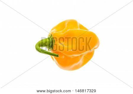 Fresh Yellow Orange Ripe Habanero Hot Chili Pepper