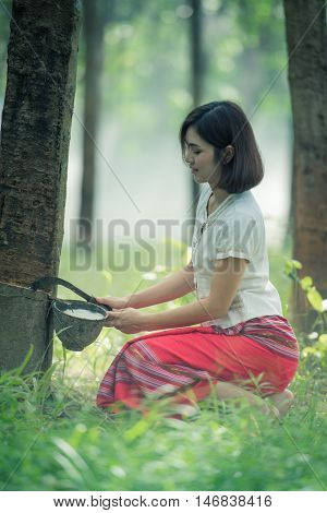 woman rubber farmer slitting rubber tree for keep latex thailand.