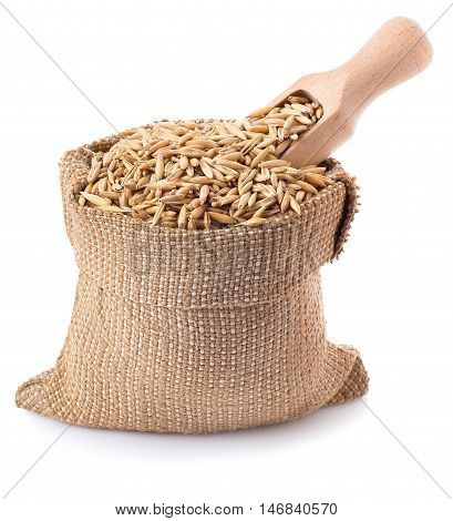 grain oats with husk in burlap bag with a wooden scoop isolate on white background. Uncooked oat grains with husk isolated on white background. Oat grains with husk. Cereal grains