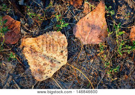 Abstract nice autumn leafage on soil