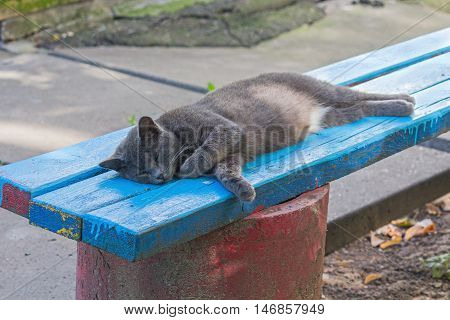 Homeless cat lying on a bench near the house. Animals