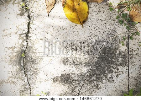 Dry Leaf/grass On Old Concrete Floor Texture Background. Frame With Nature.