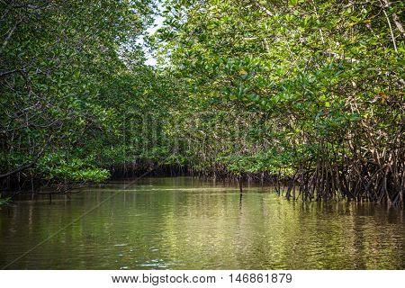 Mangrove on Bintan Island in Indonesia