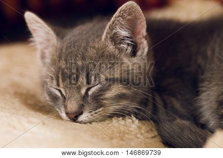 Sleeping Little Cute Cat