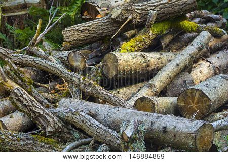 Pile of wood logs. Wooden logs in the forest