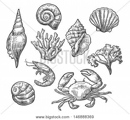 Set sea shell, coral, crab and shrimp. Vector engraving vintage illustrations. Isolated on white background.