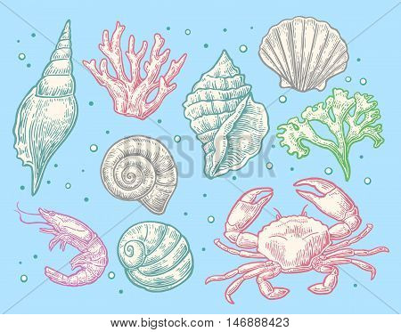 Set sea shell coral crab and shrimp. Vector engraving vintage illustrations. Isolated on blue background.