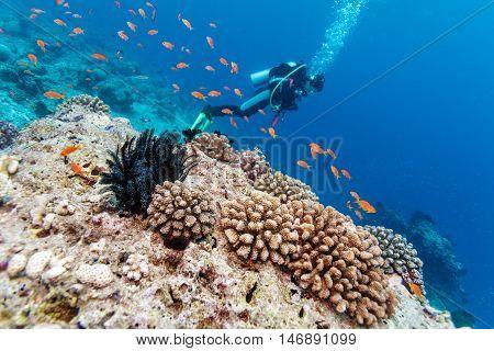 School Of Fish Near Coral Reef, Maldives