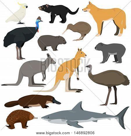Set of cartoon australian animals. Vector illustration of red kangaroo gray kangaroo platypus dingo white shark koala tasmanian devil emuechidna cassowary kiwi cockatoo parrot wombat.