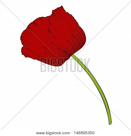 beautiful red poppy in a hand-drawn graphic style in vintage colors isolated on background. Hand-drawn contour lines and strokes.