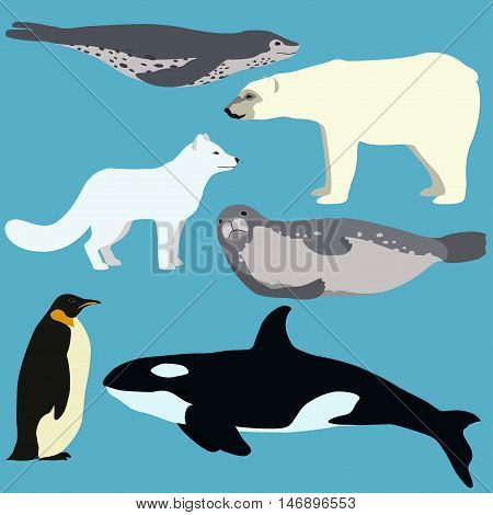 Set Of Cartoon Arctic And Antarctic Animals.