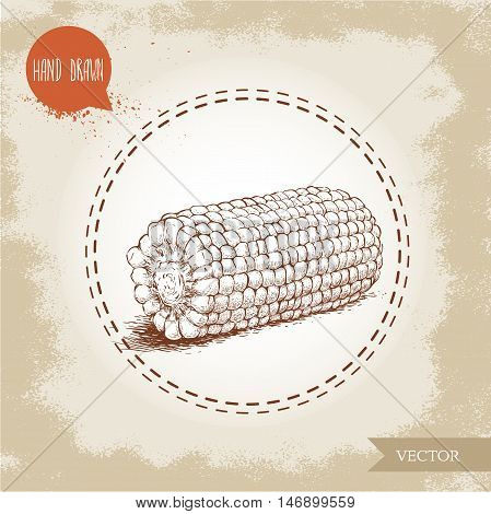 Hand drawn sketch style corn vegetable. Corncob with leafs. Organic cereal vector illustration. Sweetcorn food.
