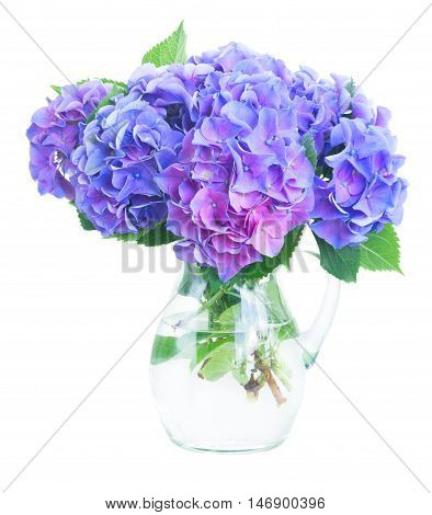 blue and violet hortensia fresh flowers in glass vase isolated on white background