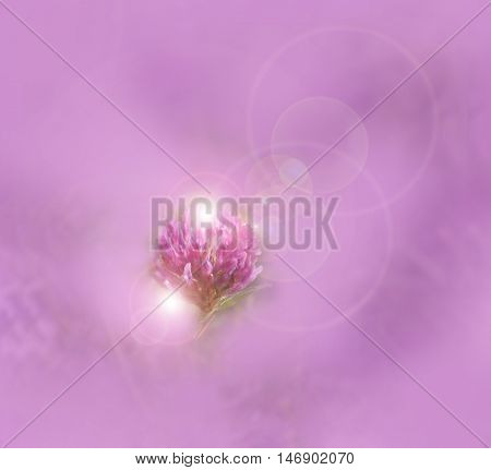 The red clover glows against a purple background.