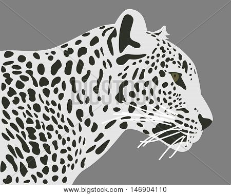 Ceylon leopard vector illustration. Side view profile. Leopard head