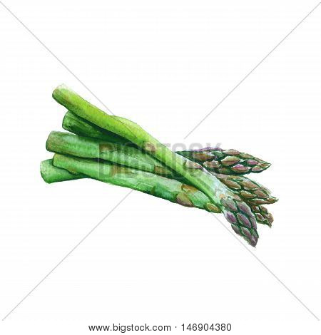 A group of asparagus isolated on a white background. watercolor illustration.