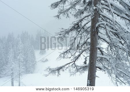 Winter landscape with wooden house in a mountain forest. Cloudy day, and fresh snow. Carpathians, Ukraine, Europe
